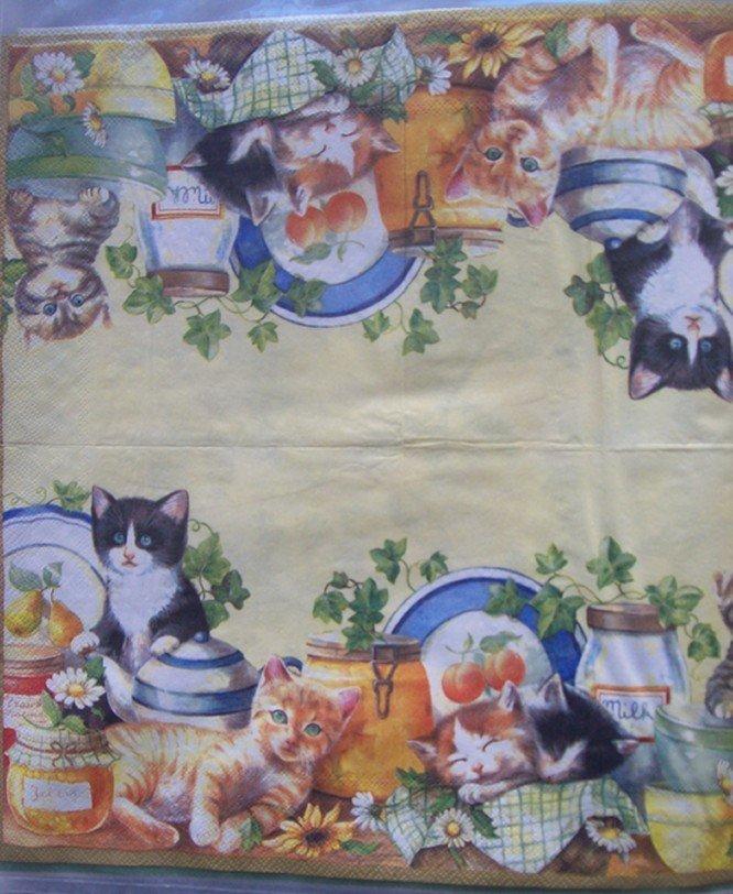 gattini in cucina