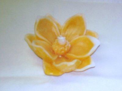 candela magnolia