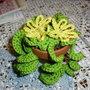 Piantina crochet