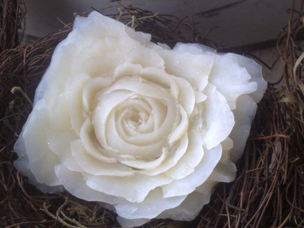 Rosa nel nido