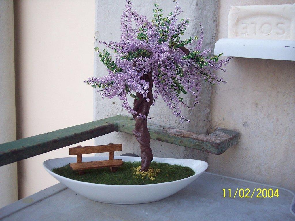 bonsai di glicine