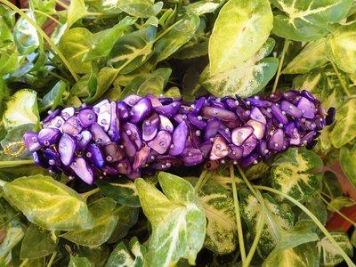 bracciale capricho viola chips