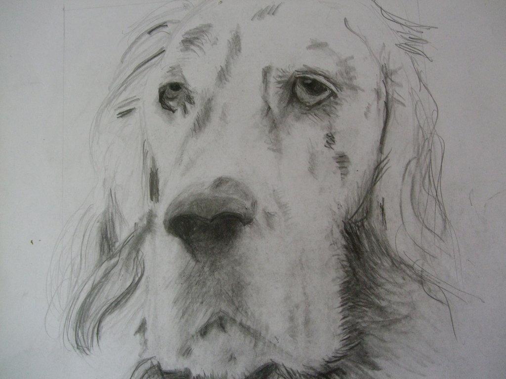 Disegno a matita fatto a mano setter per la casa e per for Disegni a matita di cani