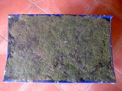 Muschio a tappeto 500 grammi