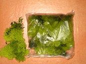 Lichene verde 50 grammi