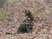 POSTER 70X100 A PREZZO DI LANCIO - AUTUMN CAT
