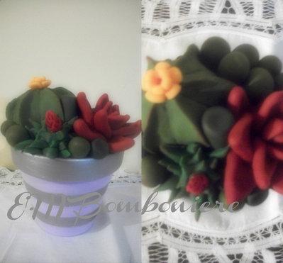 Vaso con piante grasse