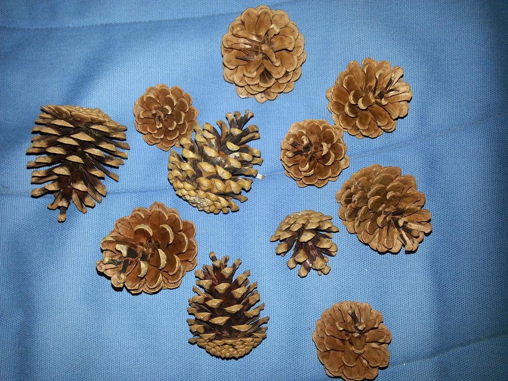 Pigne naturali per addobbi natalizi 50 Pezzi