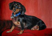 ritratto su commissione da foto cane gatto o altri animali