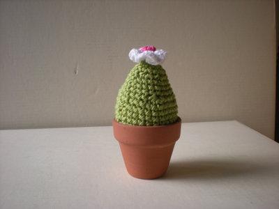 Cactus all'uncinetto