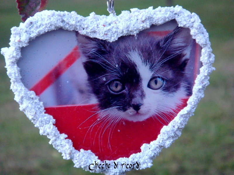 """""""Cat natalizio"""""""