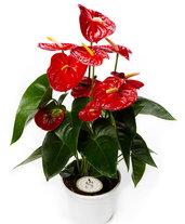 Piante e fiori confezionati