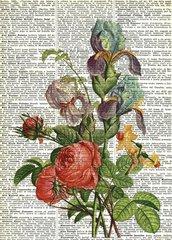 Iris e rose