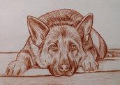 ritratto disegno cani su commissione matita sanguigna su cartoncino