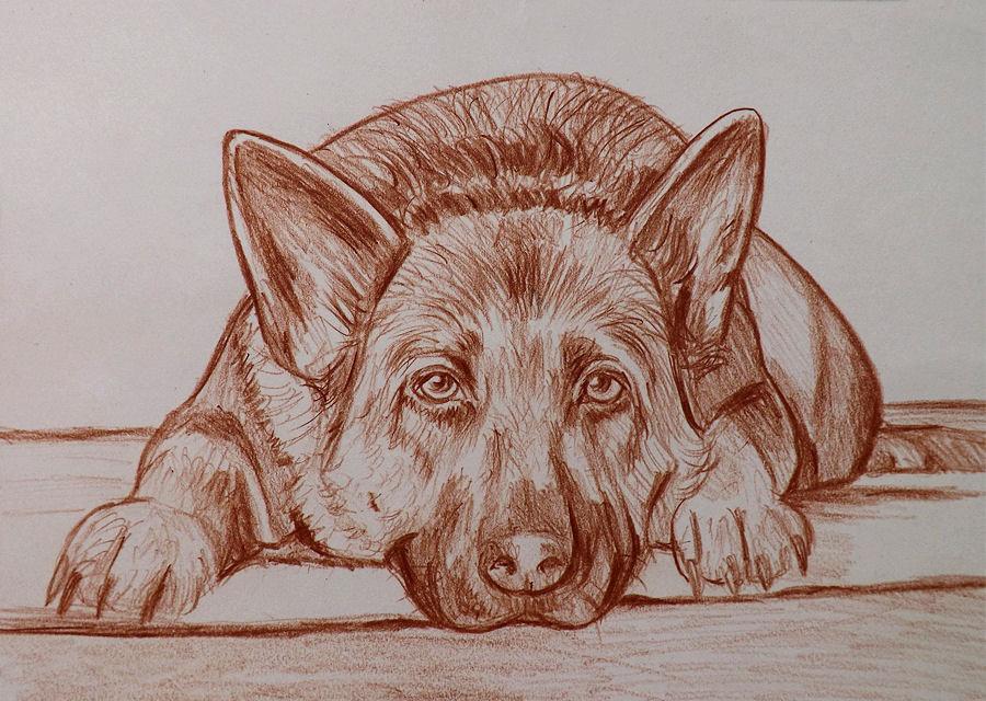 Ritratto disegno cani su commissione matita sanguigna su for Cane disegno facile