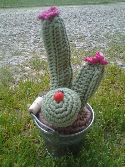 cactus uncinetto