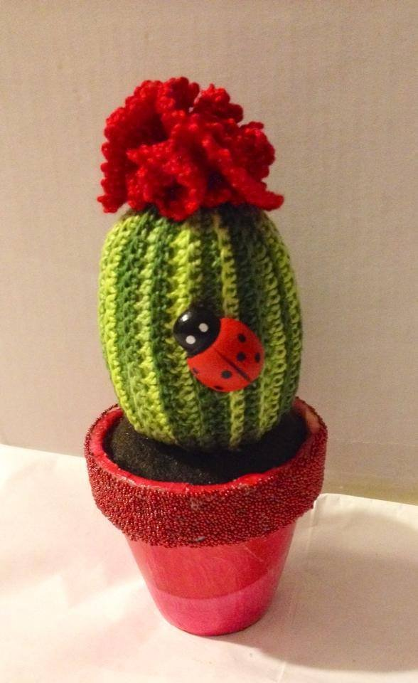 cactus in vaso