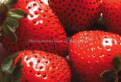 FILE jpg scaricabile - FRAGOLE