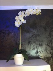 vaso con orchidea