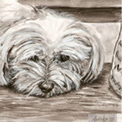 Stampa A3 cane maltese