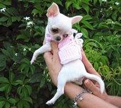 Maglioncino per chihuahua Pets Fashion Scalda cuore per cuccioli