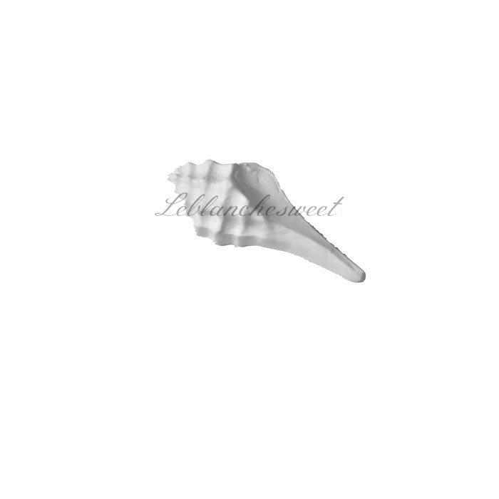 Marine coquille,gesso profumato