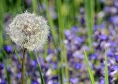 File jpg ad alta risoluzione scaricabile – Soffio d'estate