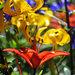 File jpg ad alta risoluzione scaricabile – Giardino d'estate