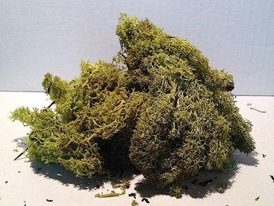 Muschio sintetico color verde chiaro 45 gr