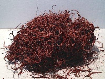 Tillantia color bordeaux 20 gr