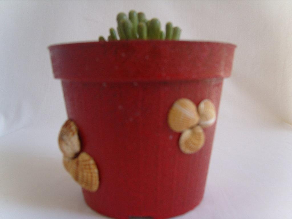 Vasi per i fiori decorati con le conchiglie