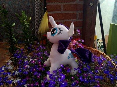 pony di pezza