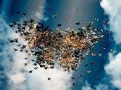 Volo di farfalle per matrimonio