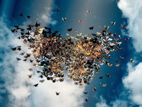 Volo di farfalle per matrimonio feste matrimonio di for Immagini farfalle per desktop