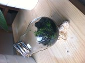Mini garden vaso lampadina riciclata