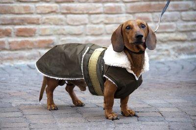 cappottini per bassotti a cani di altre razze