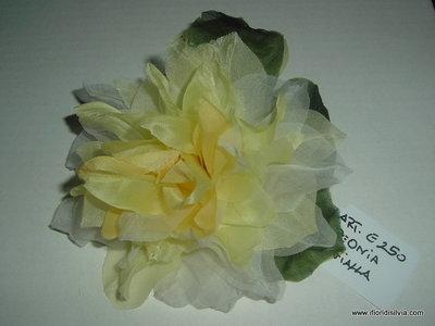 Fiore Peonia Flowers