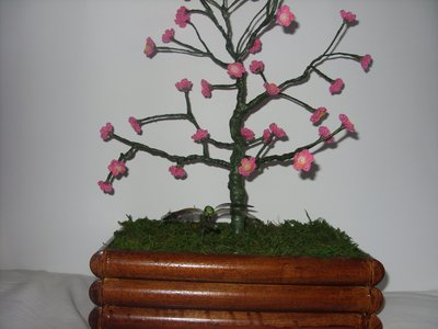 bonsai  all uncinetto