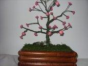 bonsai  all uncinetto