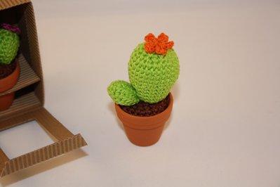 Mini cactus fiore arancione