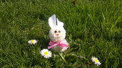 Coniglietto pon pon di lana