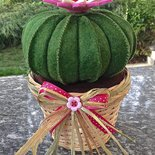 Cactus cuscino della suocera con fiore rosa e bianco per for Casa suocera in vendita
