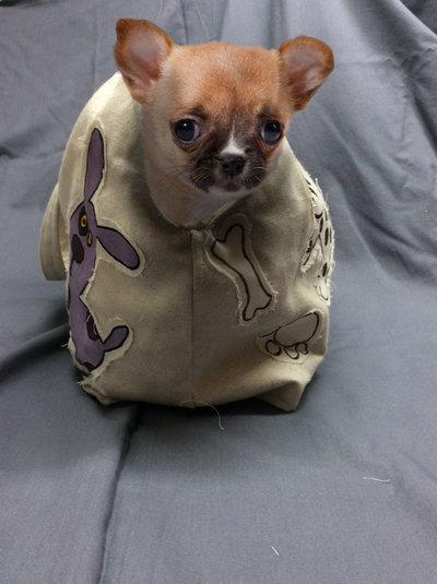 Borsa trasportino per cane di piccola taglia donna for Marsupio per cani di piccola taglia