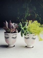 piante grasse per battesimo