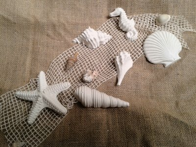 Set Conchiglie in gesso (cod_008)