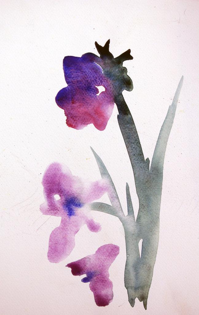anemoni