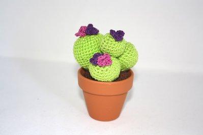 Cactus uncinetto fiori fucsia e viola