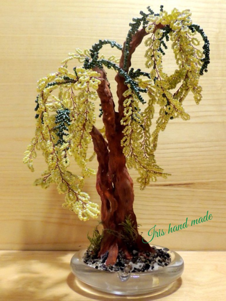 Mimosa bonsai di perline