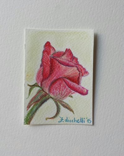 Aceo n. 2 matite colorate