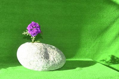 Centro tavola di pietra - Provenienza geografica 46.361773, 10.355451